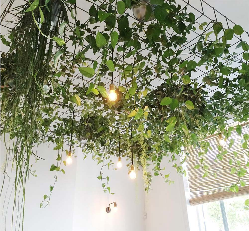 plants hanging from a metal grid on the ceiling