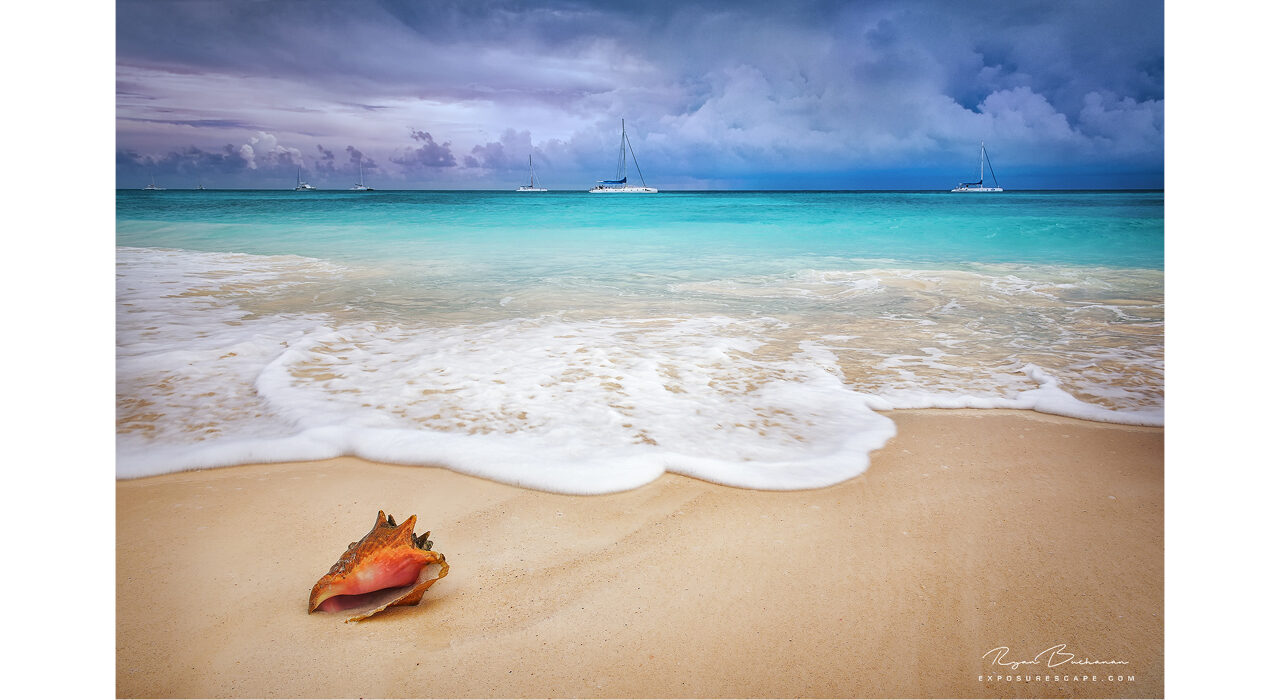 conch shell on a beach shore with tide coming in