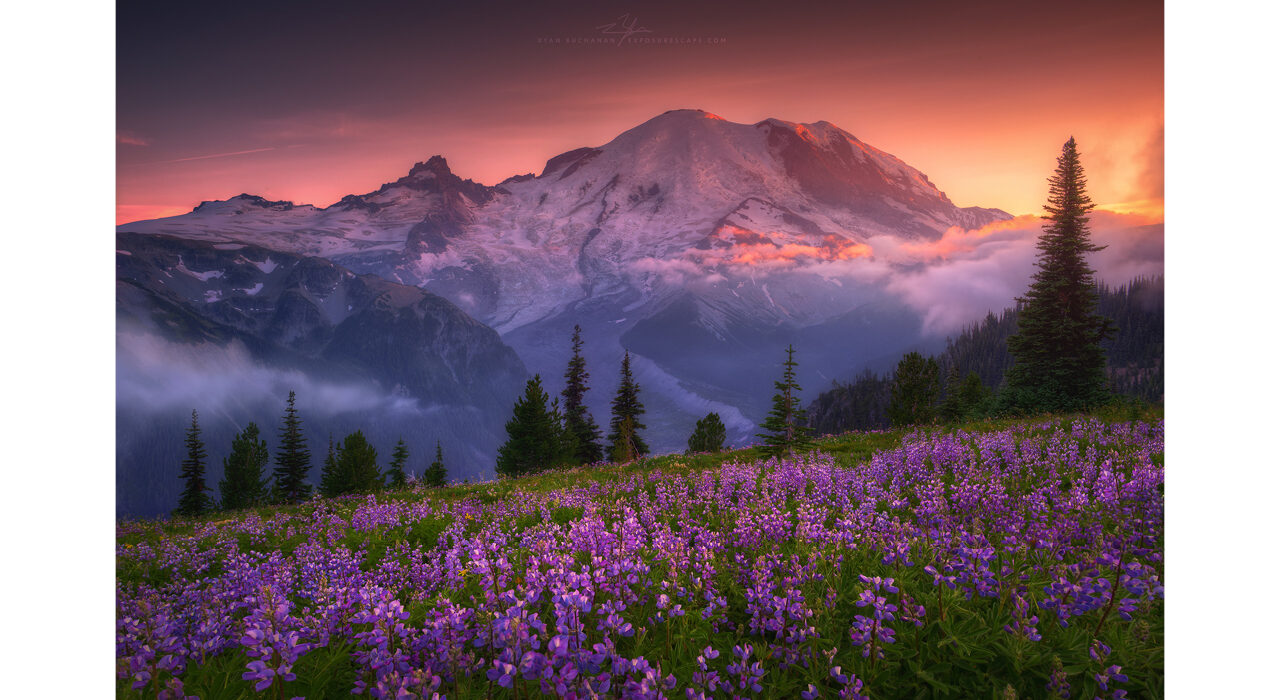 purple flowers on a hillside in front of a mountain at sunset